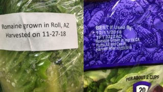 examples of how produce companies are applying the voluntary harvest region and date labeling concept to romaine